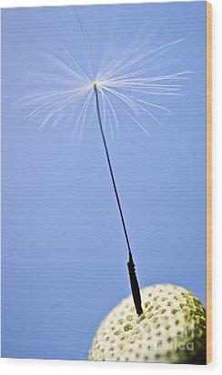 Last Dandelion Seed Wood Print by Elena Elisseeva