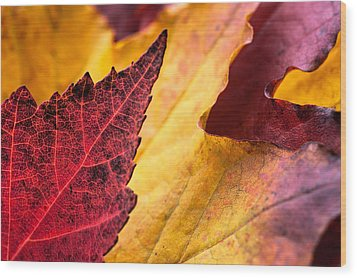 Last Days Of Fall Wood Print by Crystal Hoeveler