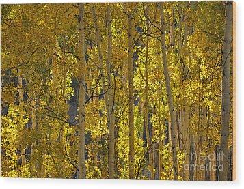 Last Dollar Aspens Wood Print