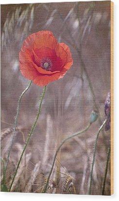 Last Poppy Wood Print by Guido Montanes Castillo