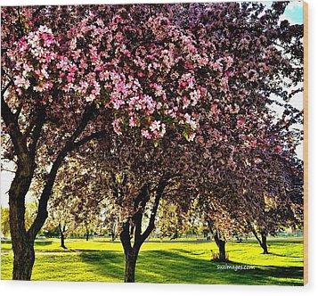 Late Afternoon At Lake Park Wood Print