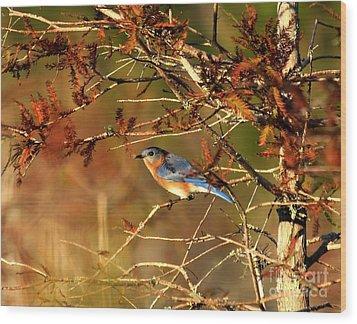 Late Fall Bluebird Wood Print