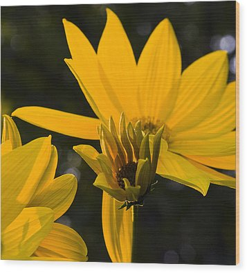Wood Print featuring the photograph Late Summer Blooms by Michael Friedman