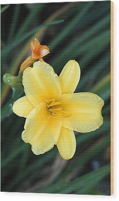 Late Summer Lily Wood Print by James Hammen