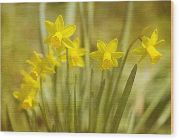 Laughing Dafs Wood Print by Rebecca Cozart