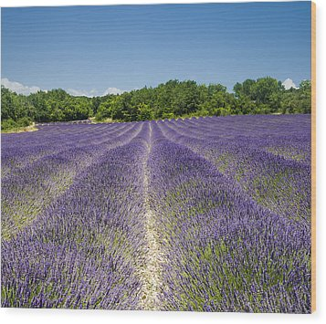 Wood Print featuring the photograph Lavander Field by Antonio Jorge Nunes
