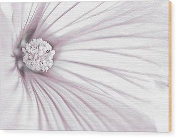 Lavatera Flower Stamen Macro  Wood Print by Sandra Foster