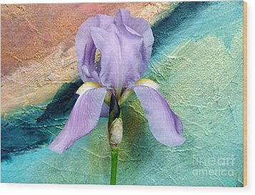 Lavendar Iris Wood Print by Marsha Heiken