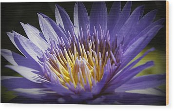 Wood Print featuring the photograph Lavendar Lily by Laurie Perry