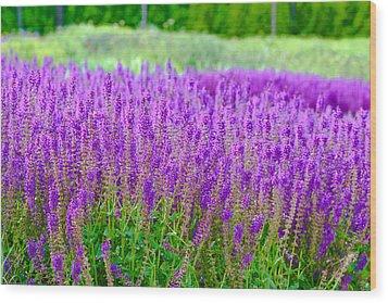Lavender Wood Print by Allan Millora