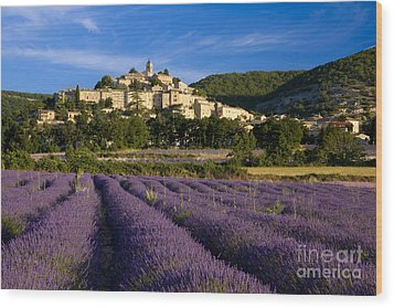 Lavender And Banon Wood Print by Brian Jannsen