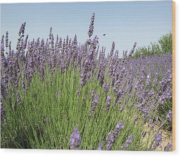 Lavender And The Bee Wood Print by Pema Hou