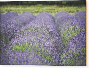 Lavender Blooms Wood Print by Vicki Jauron