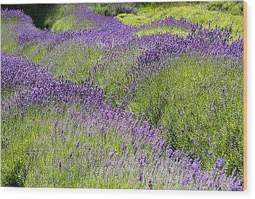 Lavender Day Wood Print by Kathy Bassett