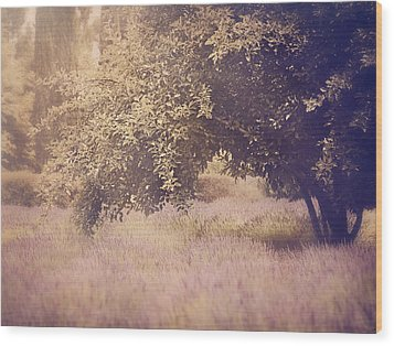 Lavender Dreams Wood Print by Amy Weiss