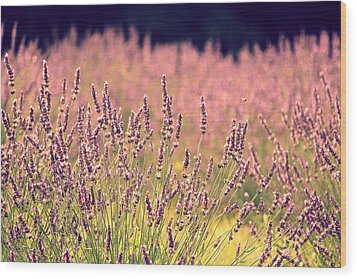 Wood Print featuring the photograph Lavender Dreams by Lynn Sprowl