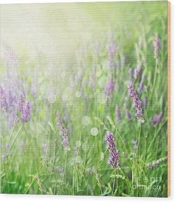 Lavender Field Background Wood Print by Mythja  Photography