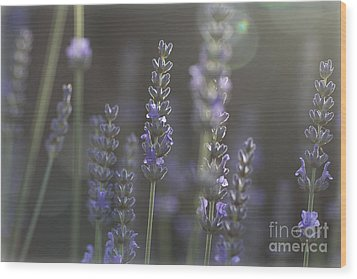 Wood Print featuring the photograph Lavender Flare. by Clare Bambers
