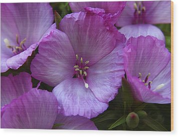 Lavender Godetia Flowers Wood Print by Carol Welsh