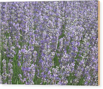 Wood Print featuring the photograph Lavender Hues by Pema Hou