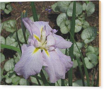 Lavender Iris Wood Print by Sarah Uman