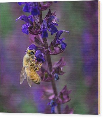 Lavender Lady Wood Print by Rhys Arithson
