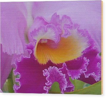 Wood Print featuring the photograph Lavender Orchid by Aimee L Maher Photography and Art Visit ALMGallerydotcom