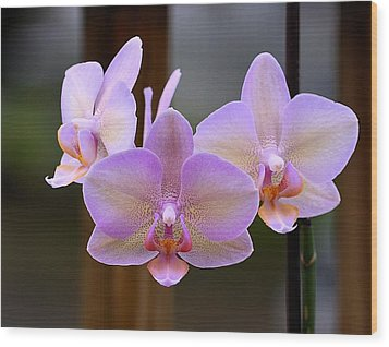 Lavender Orchid Wood Print by Kathy Eickenberg