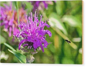 Wood Print featuring the photograph Lavender Pink Bee Balm Wild Bergamot by Karon Melillo DeVega