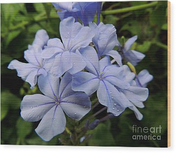 Lavender Raindrops Wood Print by Kristine Merc
