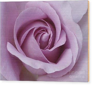 Lavender Rose Blossom 1 Wood Print by Paul Clinkunbroomer