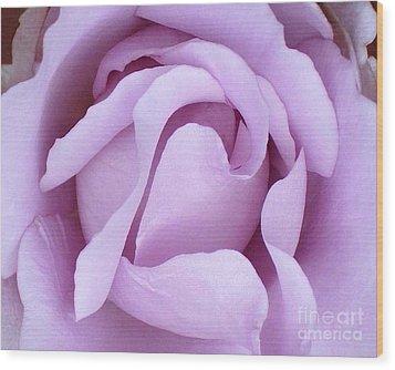 Lavender Rose Blossom 2 Wood Print by Paul Clinkunbroomer