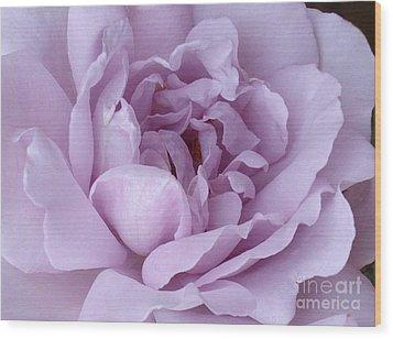 Lavender Rose Chaos Wood Print by Paul Clinkunbroomer
