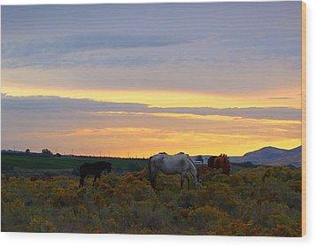 Wood Print featuring the photograph Lavender Sunrise by Lynn Hopwood