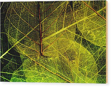 Layers Of Leaves Wood Print by Bonnie Bruno