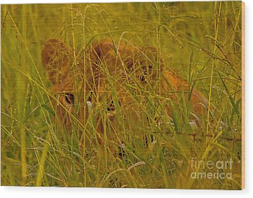 Wood Print featuring the photograph Laying In The Grass by J L Woody Wooden