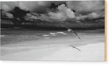 Laysan Albatross French Frigate Shoals Wood Print by Paul D Stewart