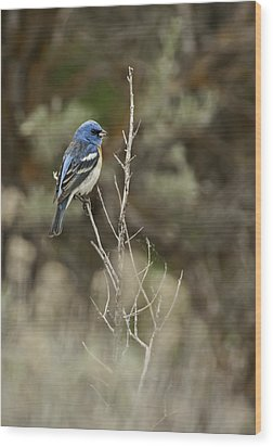 Wood Print featuring the photograph Lazuli Bunting by Judi Baker