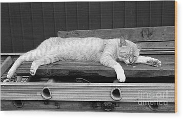 Wood Print featuring the photograph Lazy Cat by Andrea Anderegg