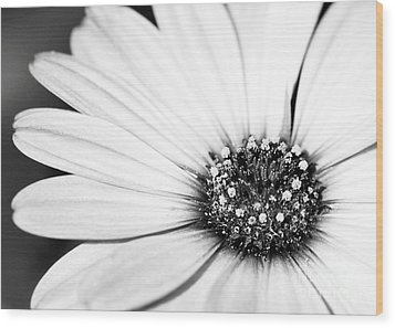 Lazy Daisy In Black And White Wood Print by Sabrina L Ryan