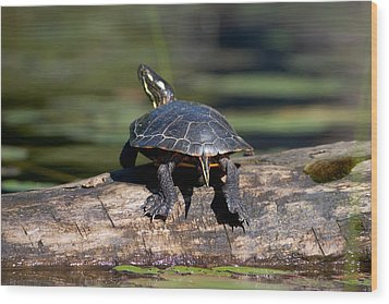 Lazy Day On A Log 6241 Wood Print by Brent L Ander