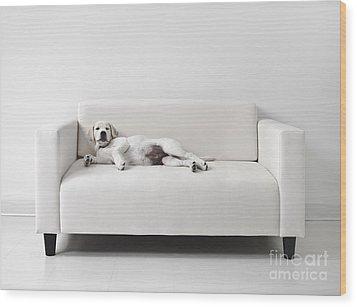 Lazy Dog On The Sofa Wood Print by Diane Diederich