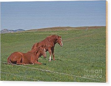 Lazy Horses Wood Print by Valerie Garner