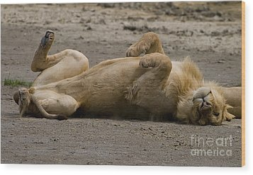 Wood Print featuring the photograph Lazy Lion by J L Woody Wooden