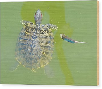 Lazy Summer Afternoon - Floating Turtle Wood Print