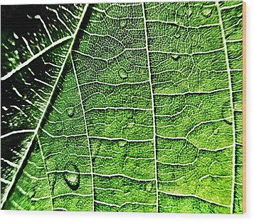 Leaf Abstract - Macro Photography Wood Print by Marianna Mills