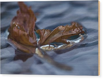 Leaf Afloat Wood Print by Nancy Edwards