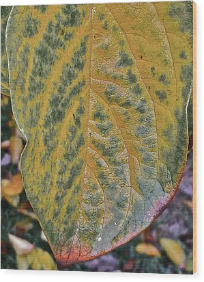 Wood Print featuring the photograph Leaf After Rain by Bill Owen