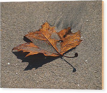 Wood Print featuring the photograph Leaf Composed by Joe Schofield