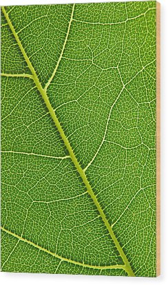 Leaf Detail Wood Print by Carsten Reisinger